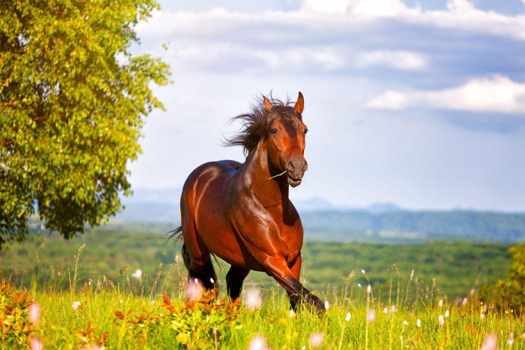 Horses Run Animals wallpapers wallpaper