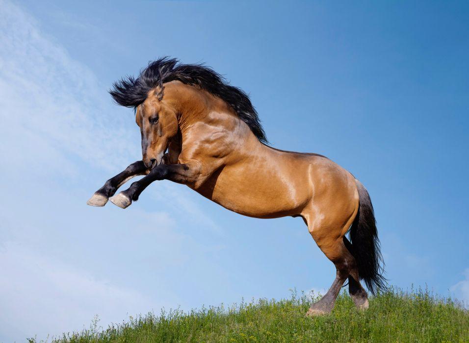 Horses Jump Animals wallpapers wallpaper