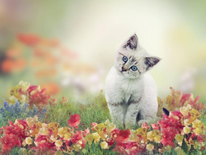 Cats Kittens Glance Grass Animals wallpapers wallpaper