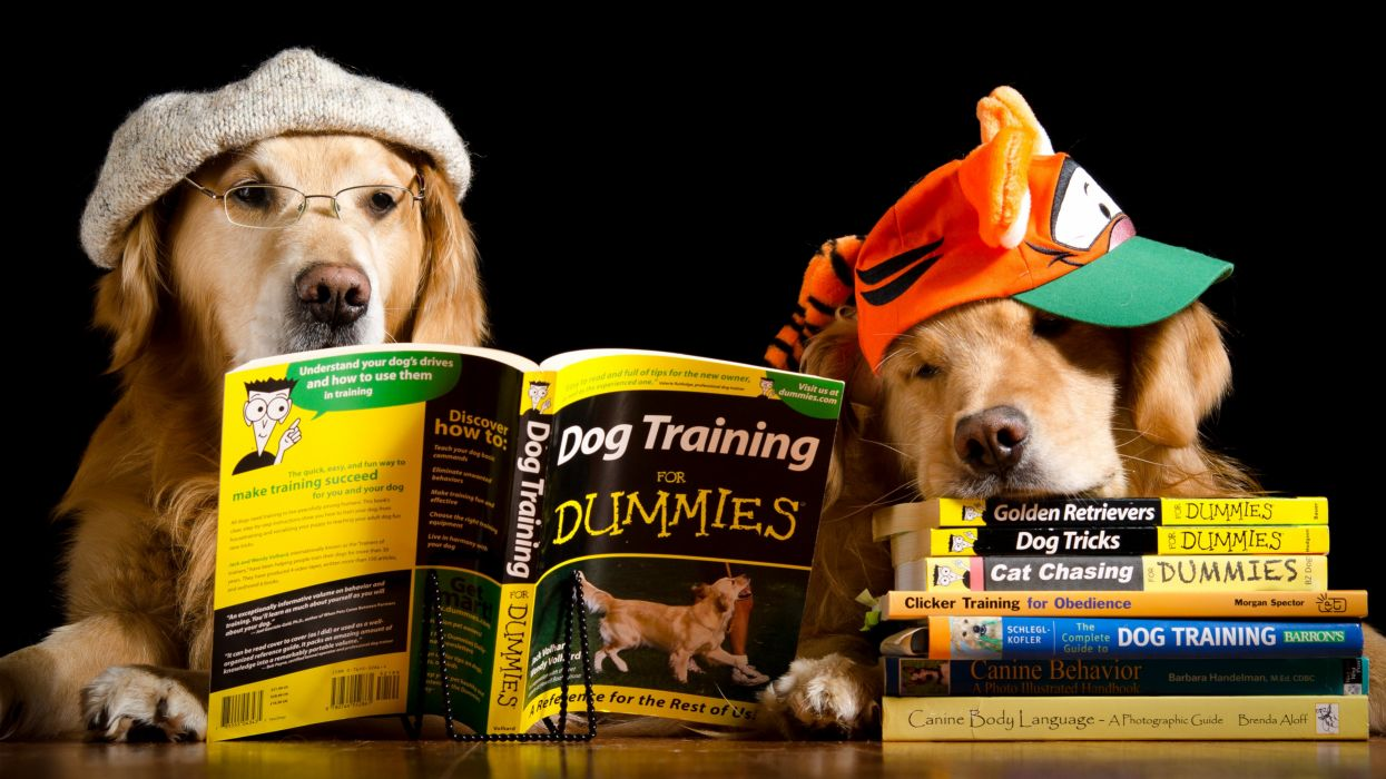 Dogs Two Retriever Baseball cap Book Glasses Animals Humor wallpapers wallpaper