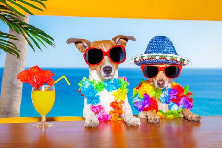 Dogs Juice Two Jack Russell terrier Chihuahua Glasses Hat Stemware Animals Humor wallpapers wallpaper