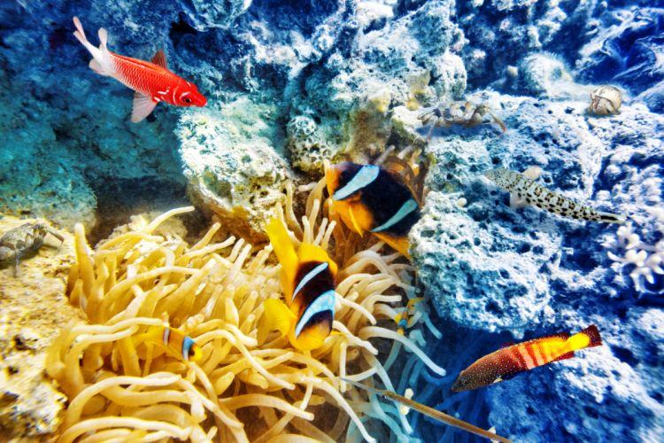 Underwater world Corals Fish Animals wallpapers wallpaper