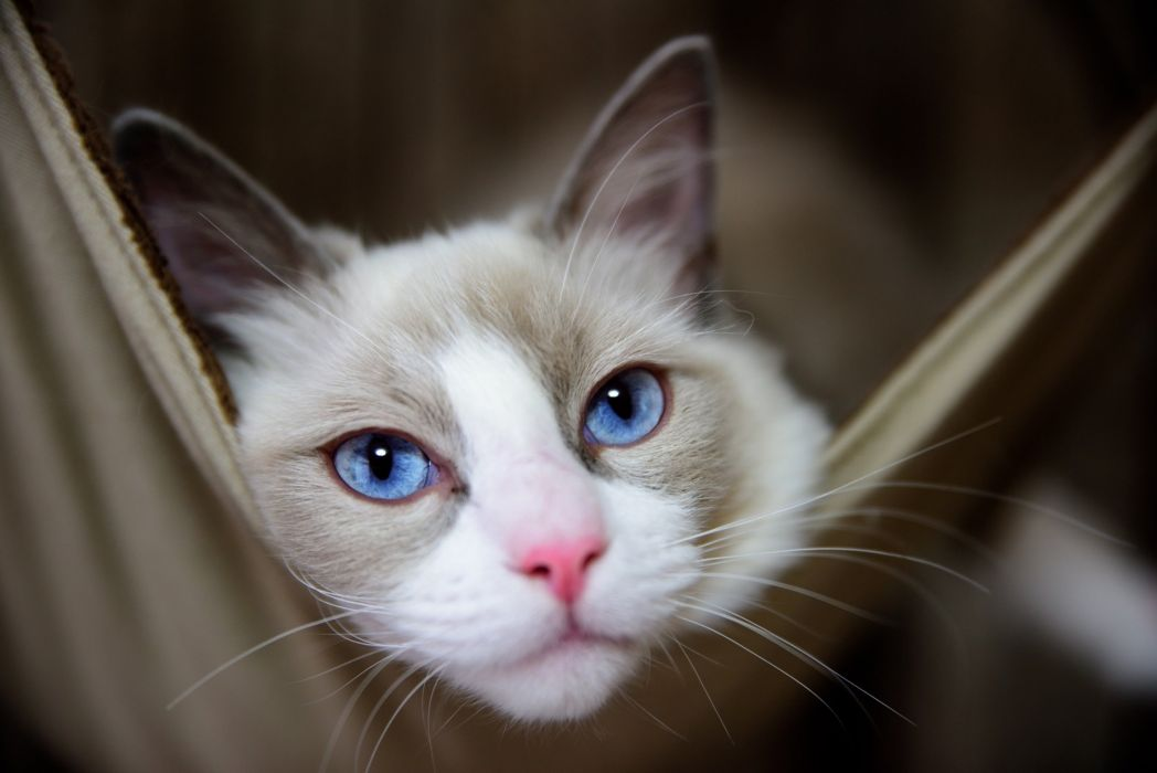Cats Glance Snout Animals wallpapers wallpaper