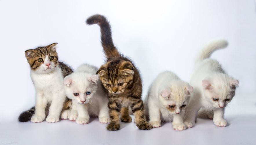 Cats Kittens White background Animals wallpapers wallpaper