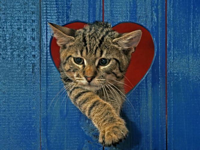 Cats Kittens Heart Animals wallpapers wallpaper