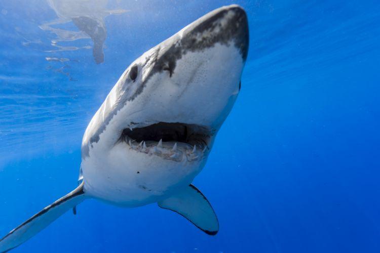 Sharks Underwater world Animals wallpapers wallpaper