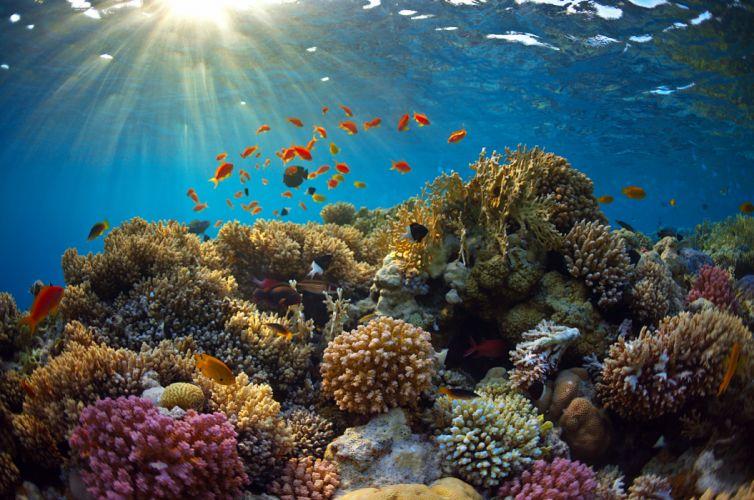 Underwater world Corals Fish Rays of light Animals wallpapers wallpaper