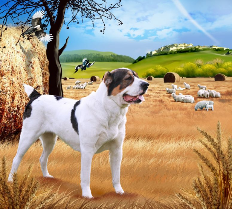 Dogs Central Asian Shepherd Dog Animals wallpapers h wallpaper