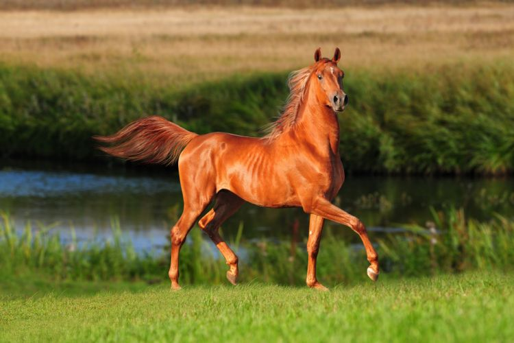 Horses Rivers Grass Animals wallpapers wallpaper