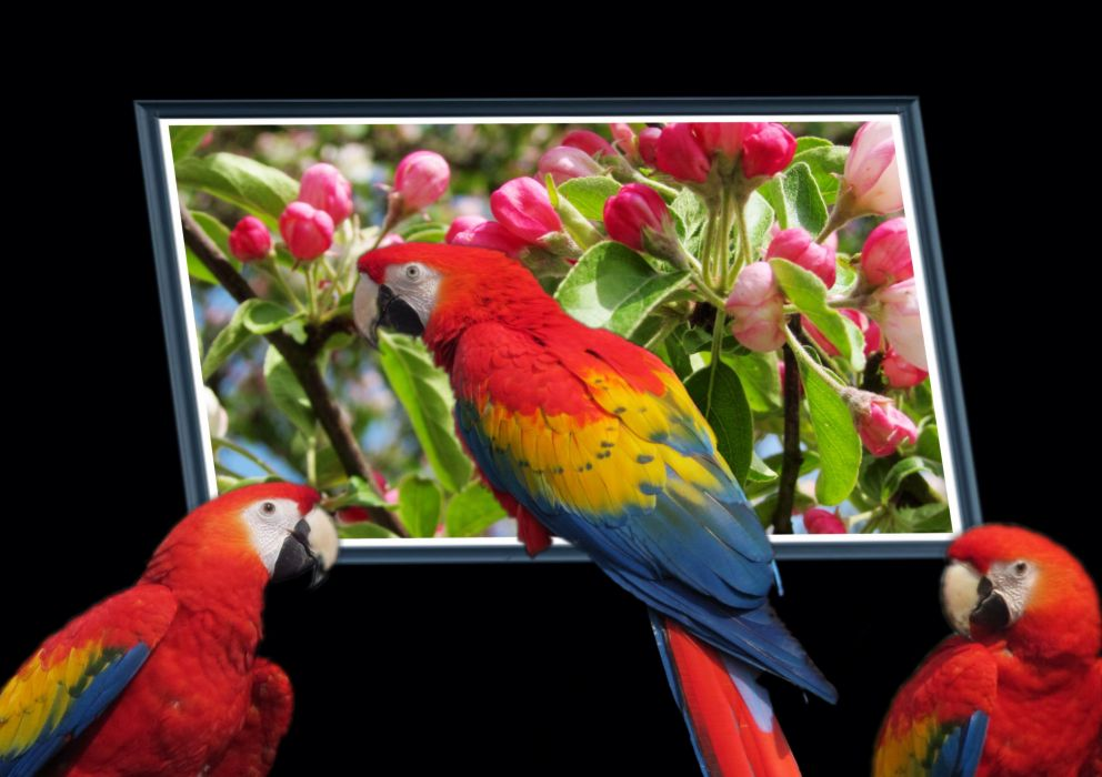 Parrots Birds Animals wallpapers wallpaper