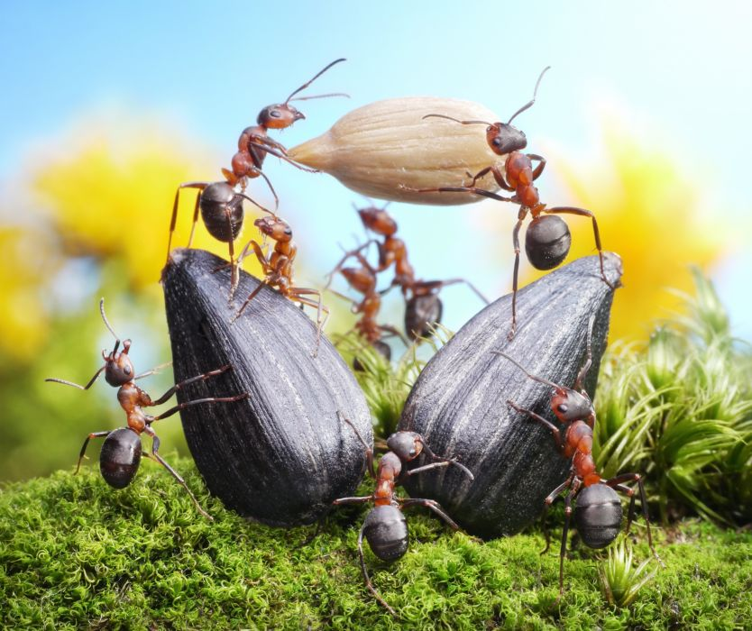 Ants Closeup Sunflower seed Animals wallpapers wallpaper