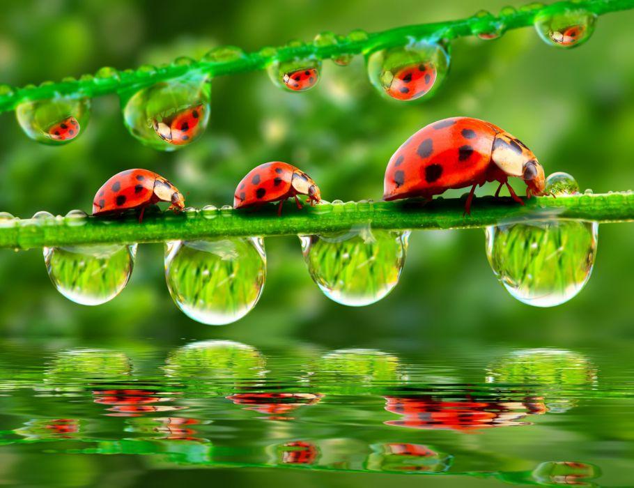 Ladybugs Drops Three 3 Animals wallpapers wallpaper