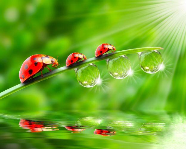 Ladybugs Drops Three 3 Rays of light Animals wallpapers k wallpaper
