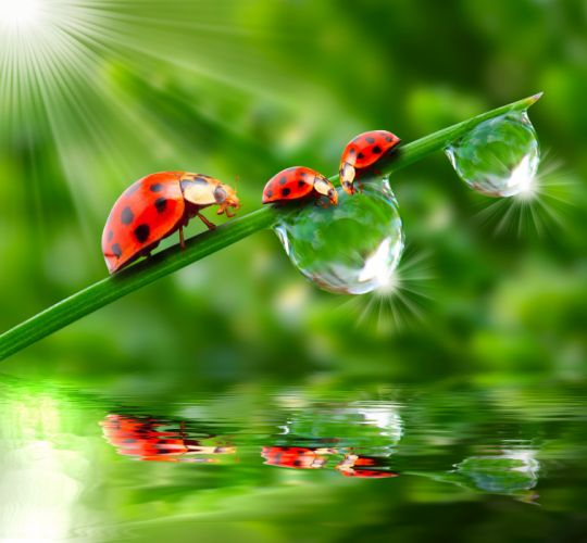 Ladybugs Drops Three 3 Rays of light Animals wallpapers wallpaper