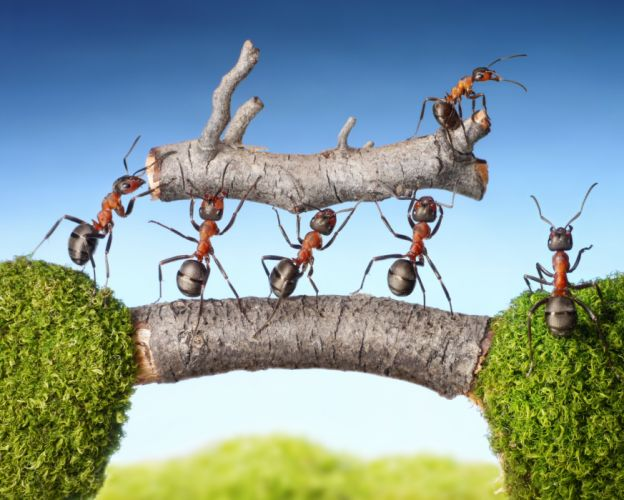 Ants Closeup Branches Animals wallpapers wallpaper