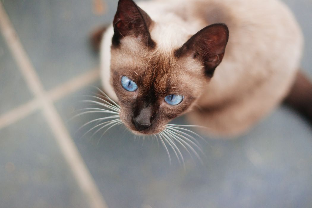 Cats Glance Animals wallpapers wallpaper