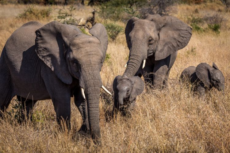 Elephants Cubs Grass Animals wallpapers wallpaper