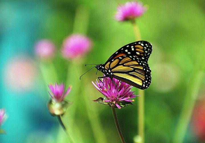 Closeup Butterflies Animals wallpapers wallpaper