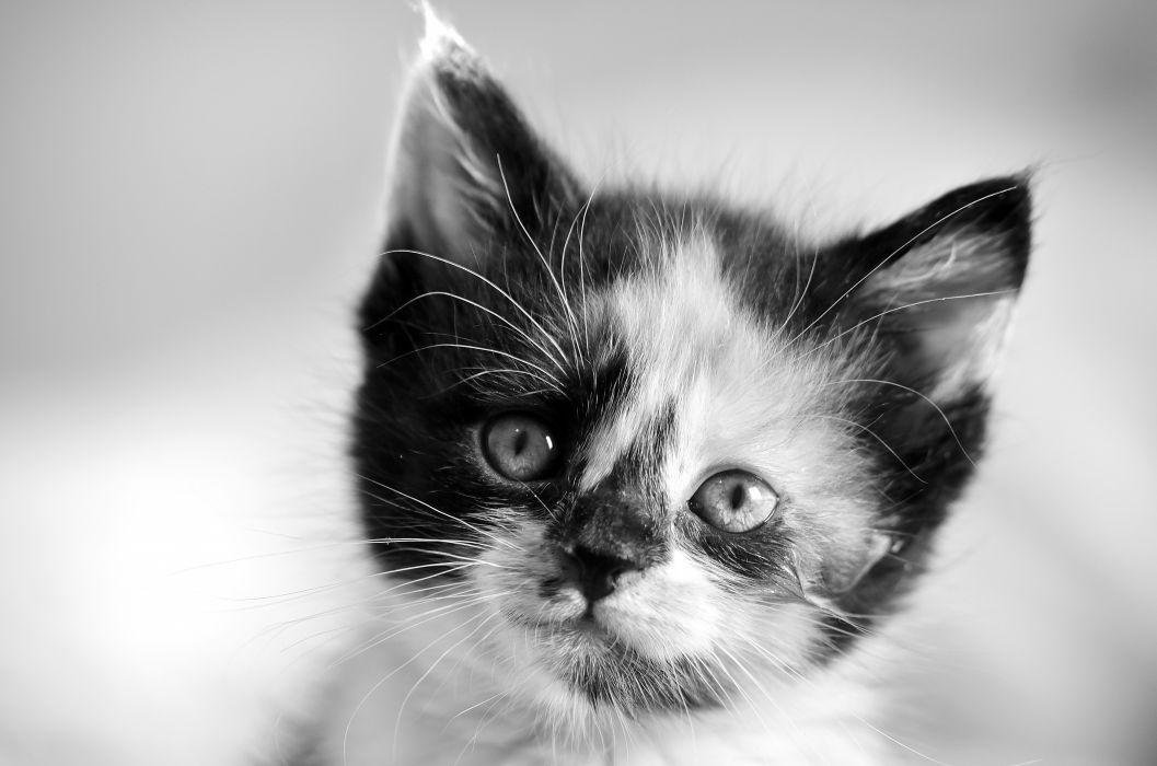 Cats Kittens Glance Snout Head Animals wallpaper