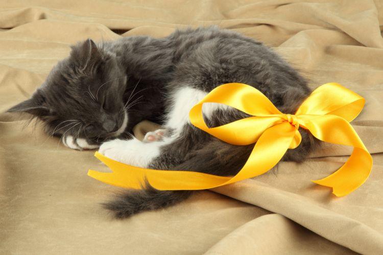 Cats Kittens Bowknot Sleep Animals wallpapers wallpaper
