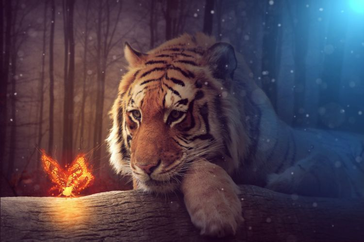 Tigers Butterflies Glance Fantasy Animals wallpapers wallpaper