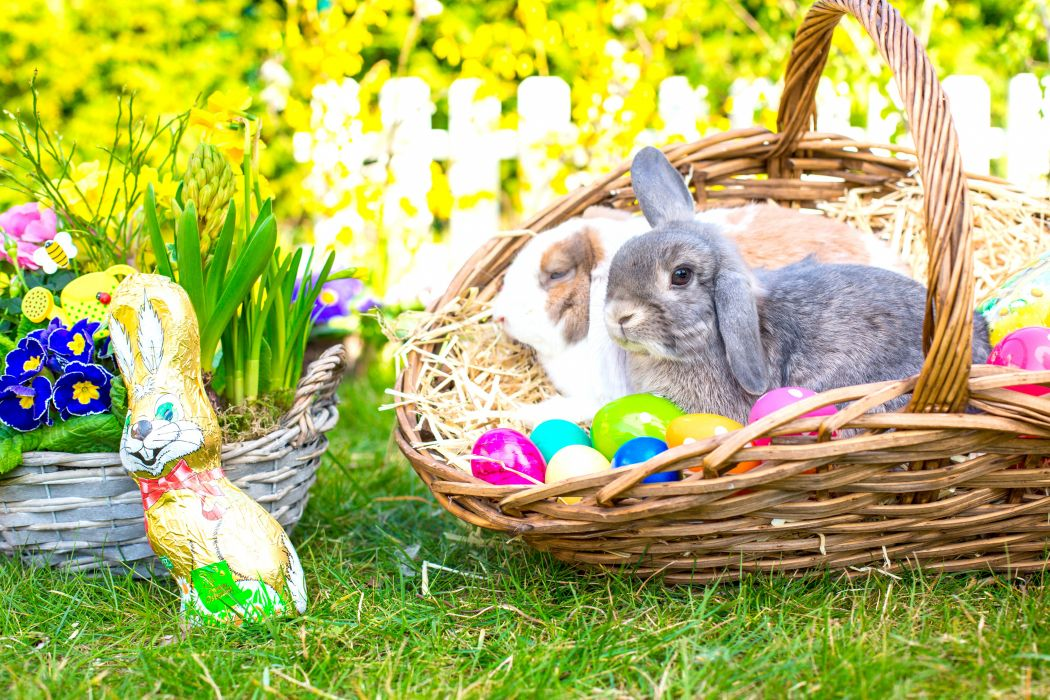 Holidays Easter Rabbits Primula Wicker basket Eggs Animals wallpapers wallpaper