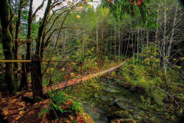 Canada Forests Rivers Bridges Vancouver Island Harris Creek Nature wallpapers wallpaper