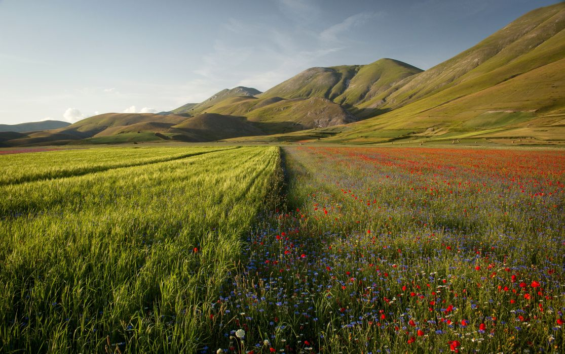 Italy Scenery Mountains Fields Poppies Castelluccio Umbria Nature wallpapers wallpaper