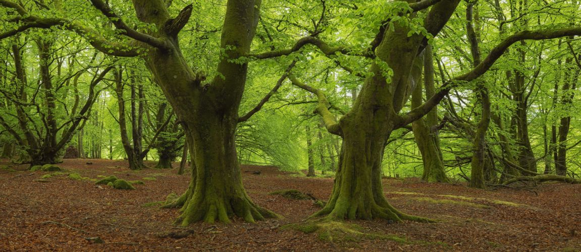 Scotland Callander Bracklinn forests trees view nature wallpaper
