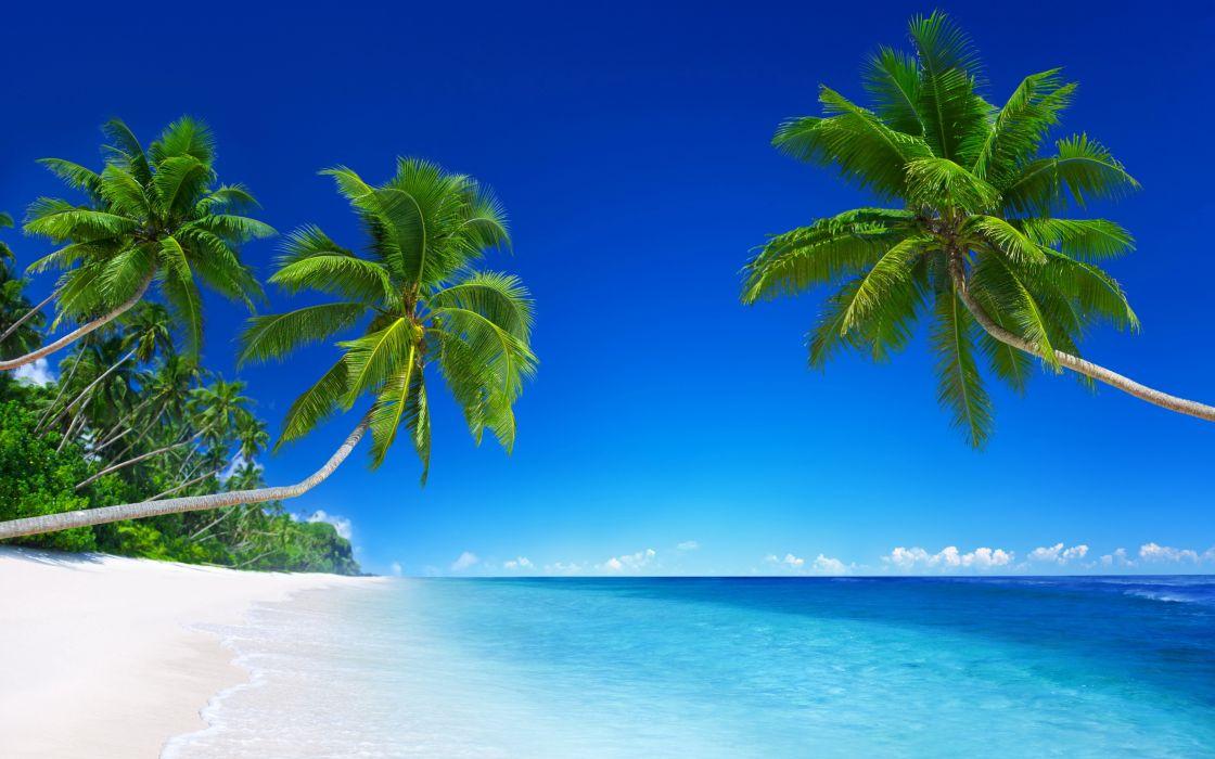 Sea Tropics Palma Beach Trees Nature wallpapers wallpaper