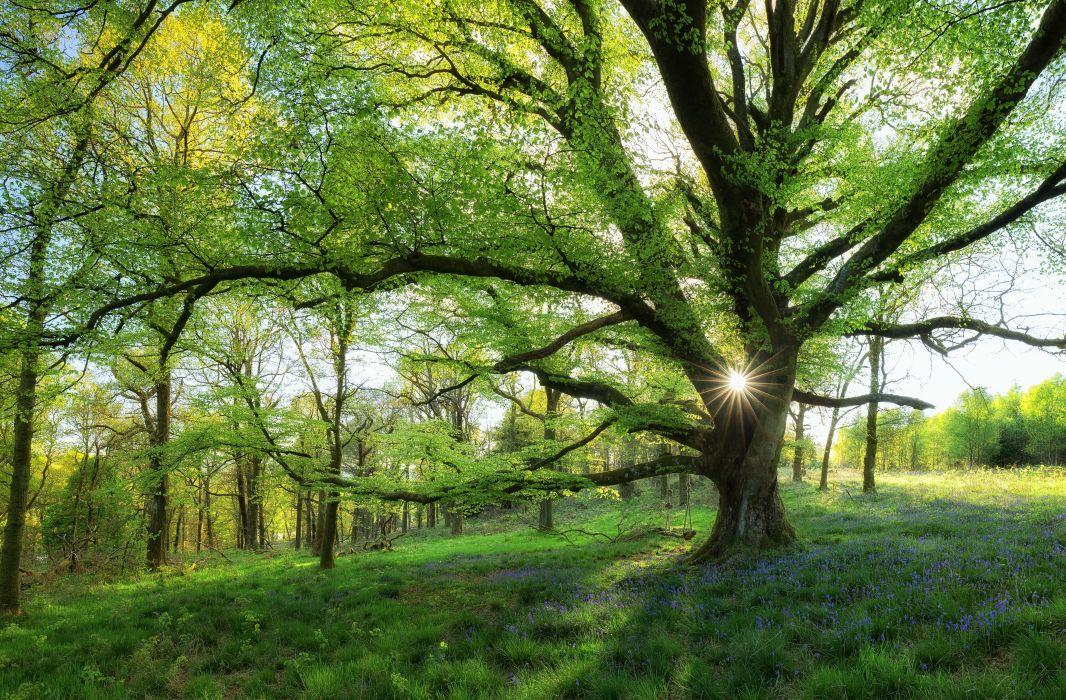 Scotland forest meadow tree swing wallpaper