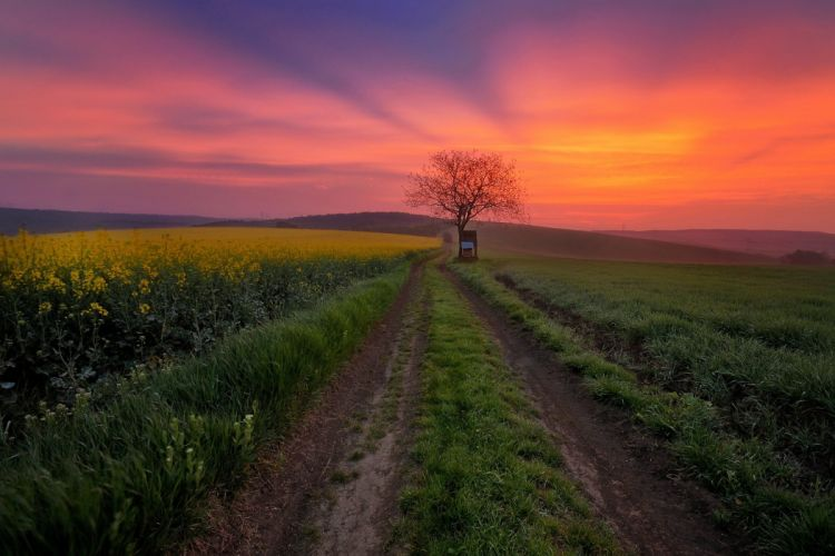 Sunrises and sunsets Sky Roads Fields Nature wallpapers wallpaper