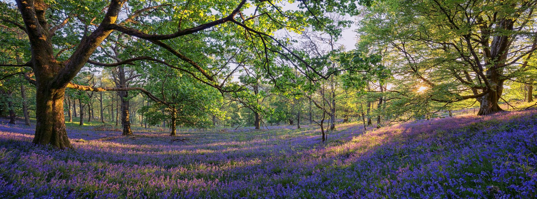 Trossachs Scotland forest trees meadow flowers panorama wallpaper