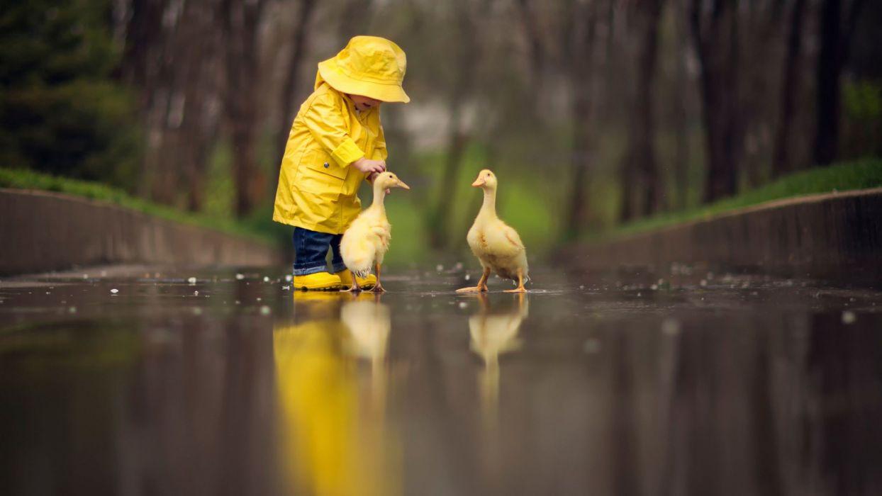 Duck Bird Child Wet Animals wallpaper
