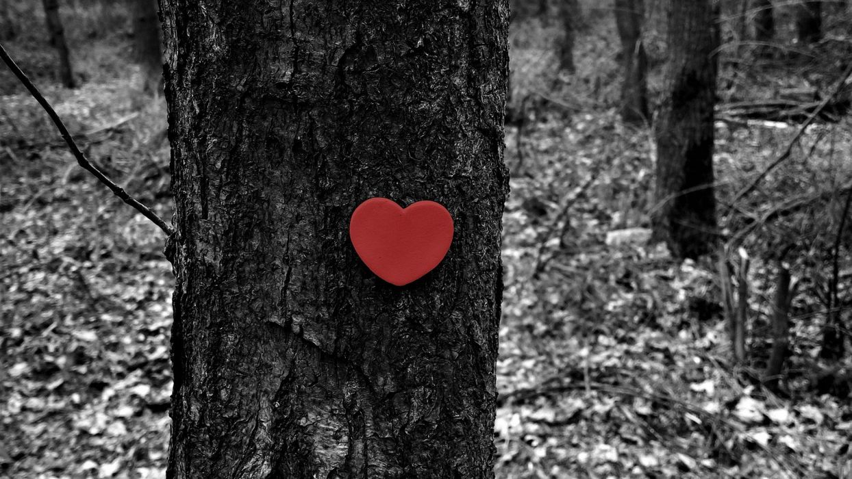 tromco arbol corazon amor wallpaper