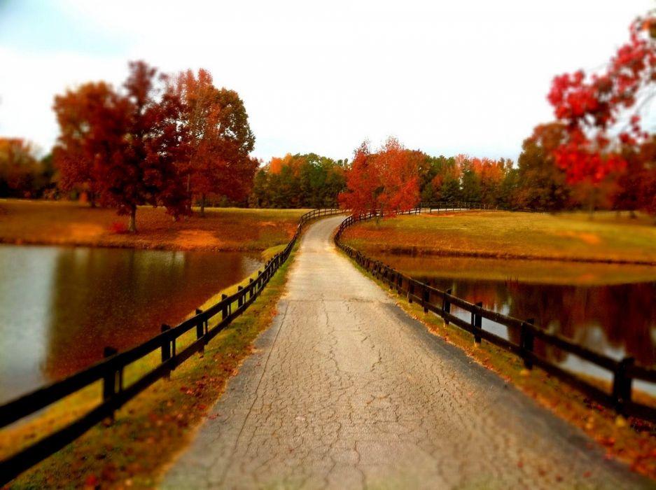 leaves walk fall park lake autumn water forest trees colors autumn splendor splendor colorful wallpaper