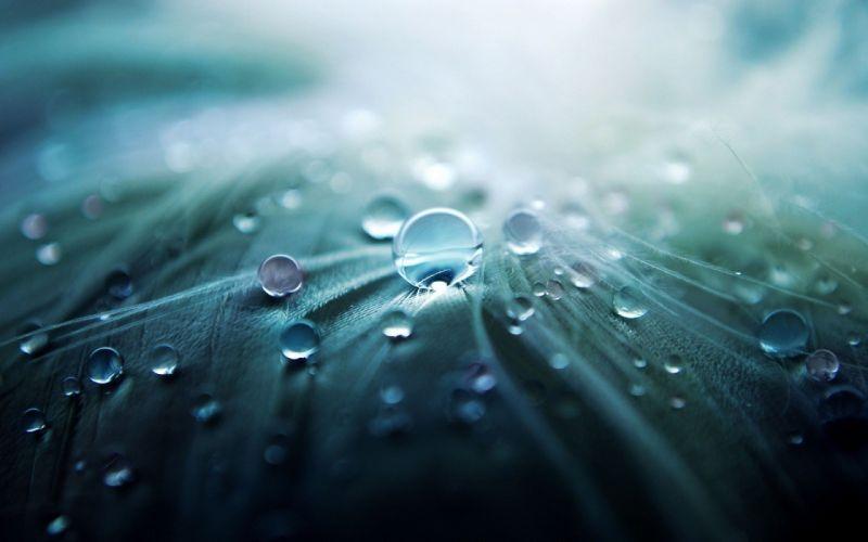 macro water drops feathers wallpaper