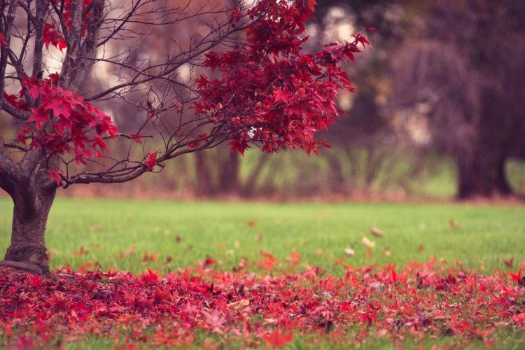 nature fall leaves autumn autumn splendor wallpaper