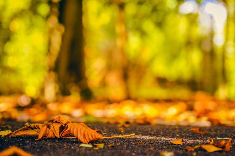 splendor fall nature bokeh autumn splendor Autumn leaves autumn wallpaper