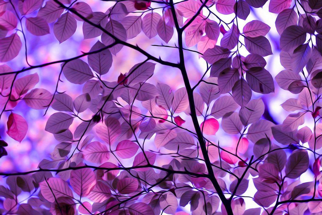 treea autumn leaves autumn splendorpurple leaves wallpaper