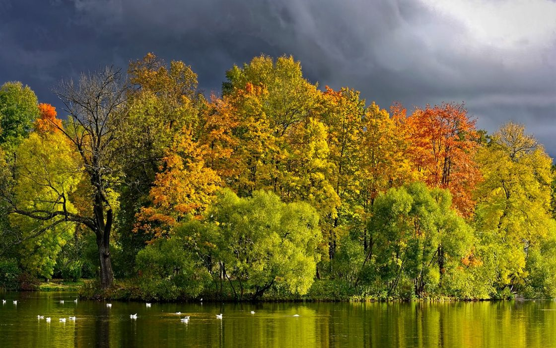 view lake grass leaves autumn splendor beautiful water trees peaceful splendor beauty clouds landscape autumn colors nature tree green forest birds storm sky woodland wood Autumn leaves autumn wallpaper