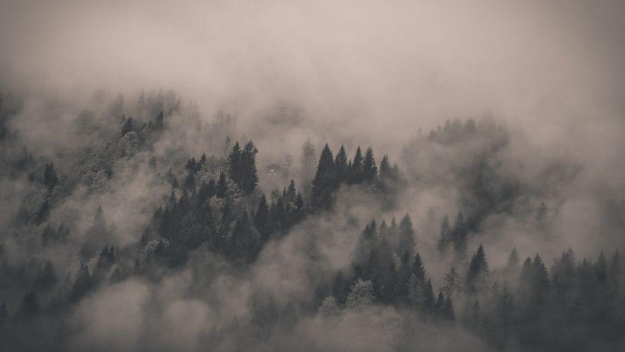 fog-covered-fir-forest-photography-hd-wallpaper-1920x1080-3465 wallpaper