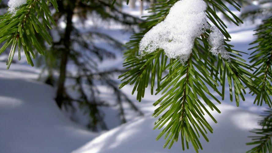 Best-top-desktop-winter-wallpapers-hd-winter-wallpaper-picture-image-photo-10 wallpaper