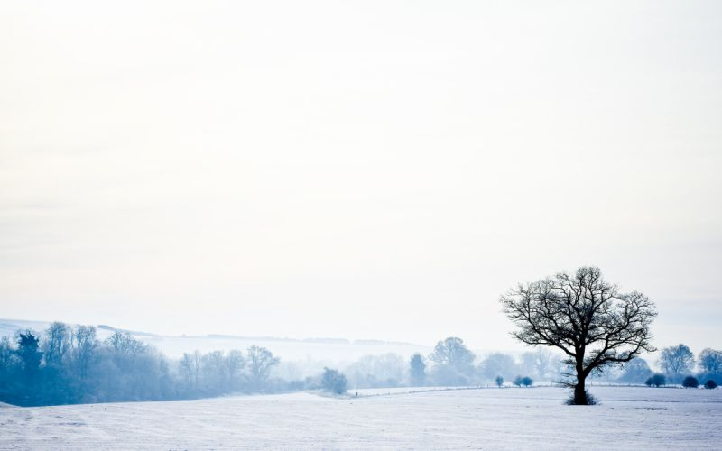 landscape-nature-winter-snow-forest-trees-sky-landscape-nature-winter-snow-forest-trees wallpaper