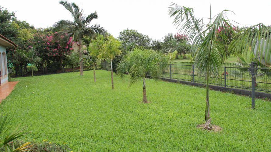 palmeiras wallpaper