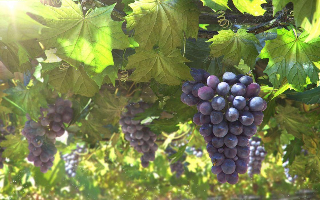 bunch leaves grapes vine sun art wallpaper