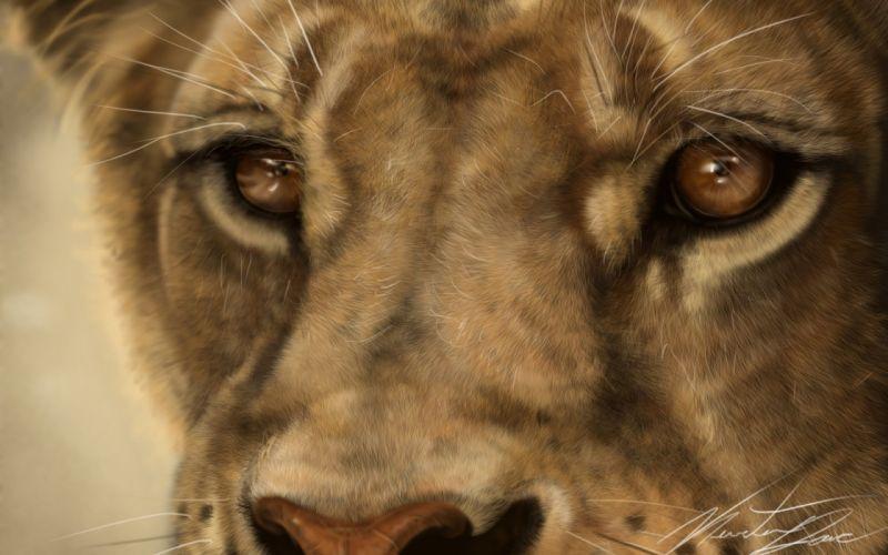 whiskers wild macro lion snout predator cat art lion painting wallpaper