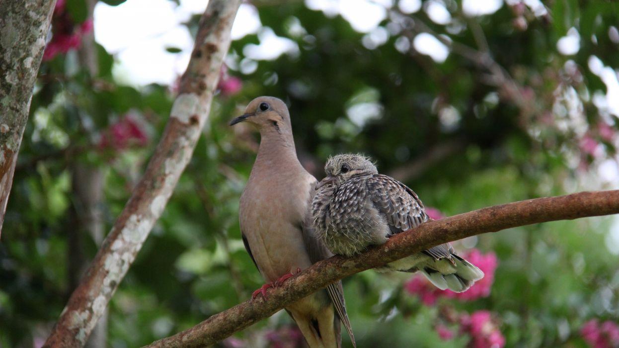 aves wallpaper