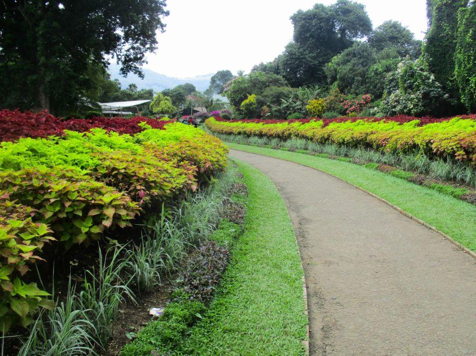 peradeniya garden sri lanka wallpaper