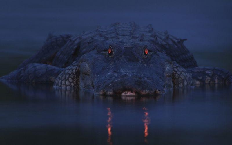 river twilight mickey crocodile alligator eyes wallpaper